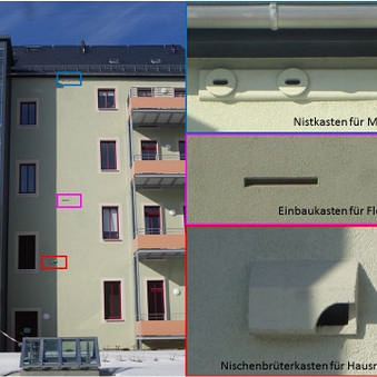 Beispiele für die Integration von Ersatz-Quartieren für Vögel und Fledermäuse