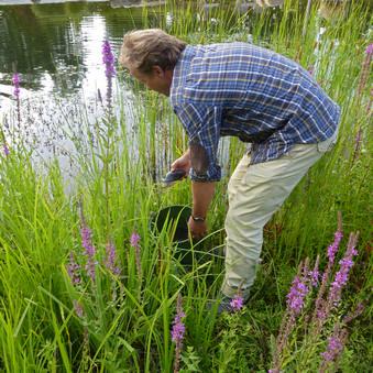 Ökologische Baubegleitungen an Gewässern